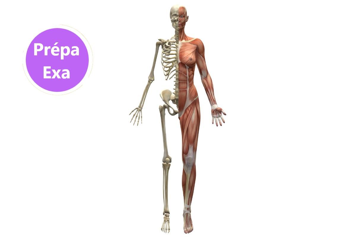 anatomie prépa